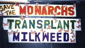 "A ""Save Milkweed"" campaign in Minnesota"