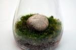 Moss Terrarium from Lifehacker