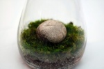 Moss Terrarium from Lifehacker