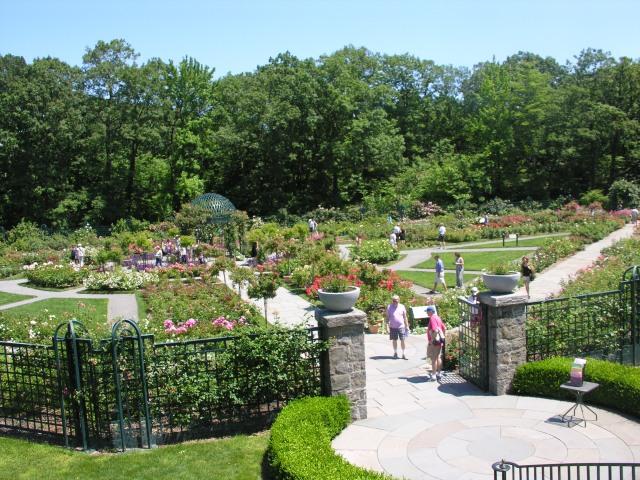 The New York Botanical Garden III Roses Digging RI